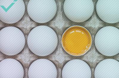 Noors team zit met 15.000 eieren in de maag wegens fout met vertaling